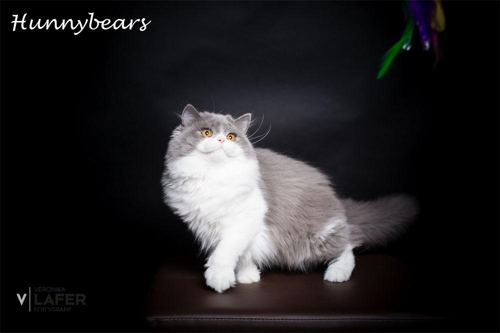 Cattery Hunnybears