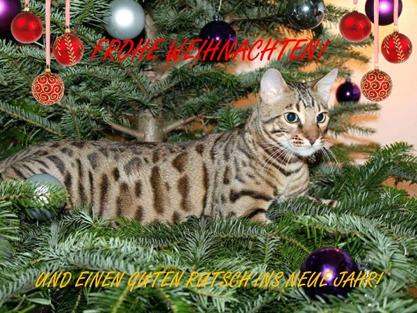 Frohe Weihnachten! | ALL ABOUT CATS